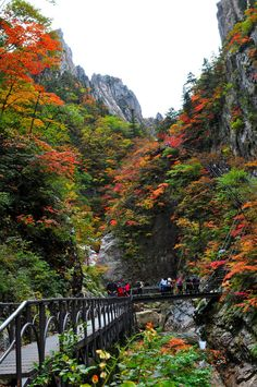 #Seoraksan National Park, #Gangwon Province, South Korea  #SouthKorea #Autumn #cheapflights #Mobissimo http://www.mobissimo.com/airline-tickets/cheap-flights-to-south-korea.html