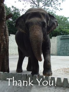 facebook page Free Mali Just a little reminder that we're very grateful for your continued support. Thank you to each and every one of you for speaking up for Mali! #FreeMali