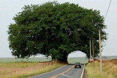Tree Tunnel, in Matão, São Paulo, Brasil Images Cools, Cool Pictures, Beautiful Pictures, Tree Tunnel, Old Trees, Strange Places, Tree Forest, Jolie Photo, Trees And Shrubs