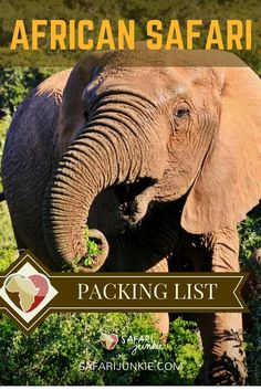 what to pack for african safari