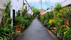 by Saqif Hasan After painstakingly searching Sydney's nooks and crannies, we've found the best hidden laneways in and around the CBD to add to Sydney's Top Australian Road Trip, Sydney, Places To Visit, Sidewalk, Top, Side Walkway, Walkway, Crop Shirt, Walkways