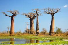 Madagaskar Reisen - Rundreisen zu den Lemuren. Madagaskar-Urlaub günstig beim Spezialisten buchen! Angebote für Reisen nach Madagaskar vom Spezialisten!