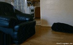 The dog who got just a little too excited at the last minute. | 50 Of The Most Important Dog GIFs Of All Time