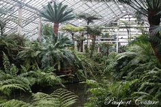 Fern Room at the Garfield Park Conservatory in #Chicago.