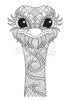 Hand Drawn Ostrich For Coloring Pagelogo T Shirt Design Effect And