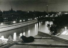 Paris, les chats, la nuit - Photo by Robert Doisneau