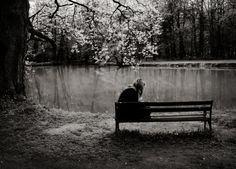 #Bench #water #cherry Blossoms