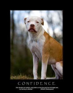 Pit Bull Art Pitbull Dog Print Inspirational by SquishyFaceStudio, $23.99
