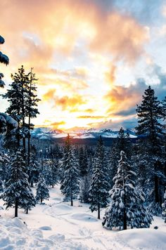 The Local's List of the 18 Best Things to Do in Lake Tahoe this Winter Tahoe Snow, Lake Tahoe Winter, Tahoe Ski Resorts, Best Nature Wallpapers, Winter Wallpapers, Lakeside Restaurant, Asia, Forest Wallpaper, Lake Mountain