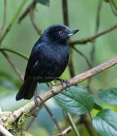 Little Black Beauty !  by Judylynn Malloch