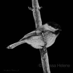 Chickadee | 5x5 scratchboard  | Melissa Helene Fine Arts + Photography www.melissahelene.com #art #artwork #scratchboard #scratchart #wildlife #animalart #bird #birds #birdart #blackandwhite