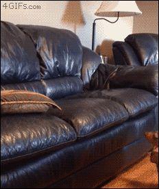 cachorro-inteligente
