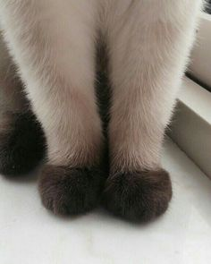 Little Paws . cat recipes monty the cat cats things cat base awesome cats cat and dog lost cat cat craft funny kitty cats cat tutorial guilty dogs laughing cat cat stuff furniture cat home ideas sheep cat Animals And Pets, Baby Animals, Funny Animals, Cute Animals, Animals Images, Funny Cats, Crazy Cat Lady, Crazy Cats, Siamese Cats