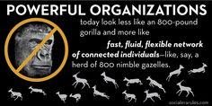 Gazelles, not Gorillas.