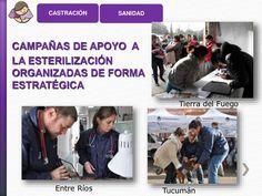 """Rechazando la eutanasia como método de control poblacional de perros y gatos CERTIFICADO DE """"COMPROMISO POR LA VIDA"""" EDUCA..."""