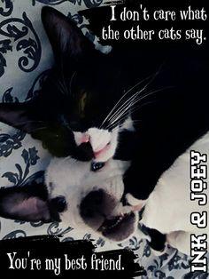 #BestFriends are hard to find.  #CatDog #xpupspack #deharo70 #PayItForward #CompassionForAnimals #MakeADifference #BeTheirVoice #StayHumbleAndKind #Cats #Dogs