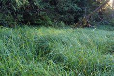 GrassAtEdgeOfForestHg.jpg (3784×2520)
