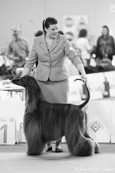 Afghan Hound, Dog Show, Milan, Dogs, Photography, Fictional Characters, Photograph, Doggies, Photo Shoot