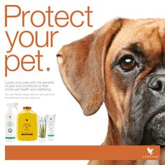 #FLP has formulated #AloeVeterinary Formula - Mother Nature's gentle Aloe spray for animals. Treat your pet today! http://link.flp.social/Rbp0QP