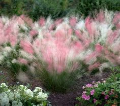 "Different Muhlenbergia capillaries (muhly grass) combined in the same clump creating a combination sold as ""Peppermint Twist"". Very kitsch."