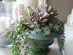 vintage container succulents before holiday makeover...