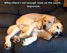 Couch real estate is expensive at night time. These guys have decided to get creative!