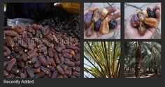 Silahkan cek koleksi foto saya yang tersedia dipasar fotografi saham Shutterstock untuk melengkapi kebutuhan gambar anda. https://www.shutterstock.com/g/tupaiterbang. Jika anda fotografer juga dan ingin menjual foto lewat agen Shutterstock, segera daftar saja.