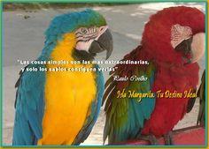 Guacamayas Margariteñas