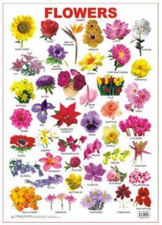 flower-chart2-bridebloom (463×640) | Надо попробовать