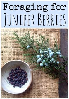 Herbal Medicine Juniper Berries are edible and medicinal, learn about foraging them! - Foraging for Juniper Berries. More than just gin. but please, don't forget about the gin! Healing Herbs, Medicinal Plants, Herbal Plants, Edible Wild Plants, Juniper Berry, Wild Edibles, Survival Food, Growing Herbs, Gardens