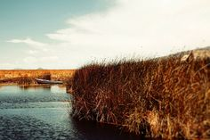 ARTFINDER: Inlet gold by Nadia  Attura - Inlet through golden reeds of lake Titicaca. Fine Art photographic print, professionally hand printed on fine art gallery paper using archival pigment ink an...
