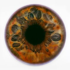 """Iris paintings by Marc Quinn from a series entitled """"We Share our Chemistry with the Stars""""."""