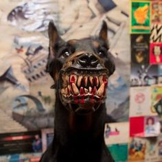 dogs Diy Projects diy projects for home Dog Nose, Dog Paws, Dog Costumes, Halloween Costumes, Outside Dogs, Dog Muzzle, Doberman Dogs, Military Dogs, Dog Safety