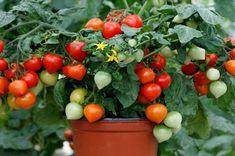 F1, Gardening, Vegetables, Sweet, Decor, Candy, Decoration, Lawn And Garden, Vegetable Recipes