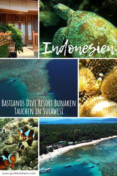 Bastianos Dive Resort Bunaken Tauchen im Norden von Sulawesi Ubud Hotels, Tromso, Bangka, Dive Resort, Koh Tao, Backpacking, Diving, Places To See, Asia