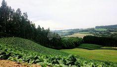 """Fazenda à venda no município da Lapa/PR, localidade chamada """"Pedra Lisa"""". 10 alqueires ou 242.000,00 m² => plantação de eucaliptos (aproximadamente 8 anos) com mais ou menos 40 mil árvores. Apolar Champagnat no (41) 3335-7190 / (41) 99272-8778 whats. Referência do imóvel 130199."""
