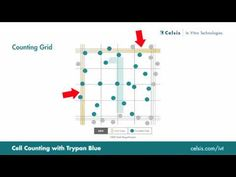 ▶ Cell Counting Using the Trypan Blue Exclusion Method - YouTube