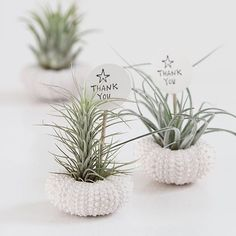 They re the super low maintenance plant perfect for wedding favours