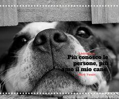 Bhè in effetti. A vedere il numero di cani che ci sono in giro,statisticamente mi sa che va a finire così.Intendiamoci amo i cani e le persone. goo.gl/d3NH8W