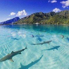 Isla Moorea, Polinesia Francesa (PF)