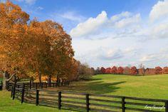 Scenic Kentucky Horse Farm