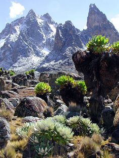 Mount Kenya - Kenya Where there is snow on the equator!  It was an amazing experience hiking that.