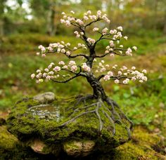 Spring Bonsai tree by Axel Örtenblad. Real or fake? ;-) #bonsai #landscape #nature #beautiful #inspiration