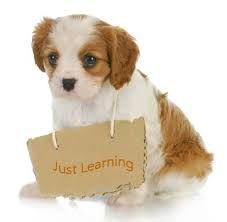 https://www.youtube.com/watch?v=PqL-e9TInd4&feature=youtu.be  Dogs are lovely and obedient and some amongst the best pets to possess at your home. But they need to be given professional dog training so that   they can learn proper behavior and mannerisms.
