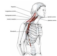 Neck Protraction Stretch - Common Neck & Shoulder Stretching Exercises | FrozenShoulder.com