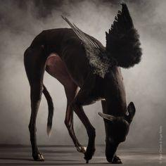 Paul Croes Animal Photography - Il Mio Cane | Portale sui Cani