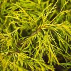 Fall fireworks: Plants that light up your landscape   Midwest Living