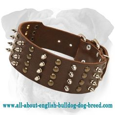 Riveted #Leather #Collar for #English #Bulldogs $59.90 | www.all-about-english-bulldog-dog-breed.com