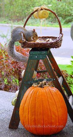 28 Best Squirrel Park Images On Pinterest