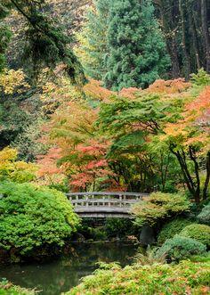 Japanese Garden, Seattle like the Japanese maple around the bridge--need to do that to our bridge